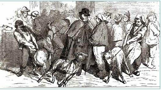 Gravure représentant une scène de marché de veau au XIXème siècle Extrait du bulletin n°69 de la Société historique de Paris